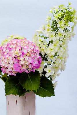 090607flower2_blog