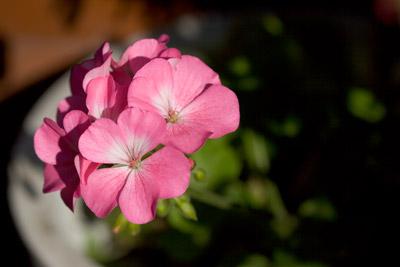 090926flower2_blog