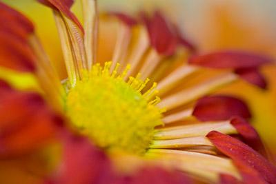 091111flower5_blog