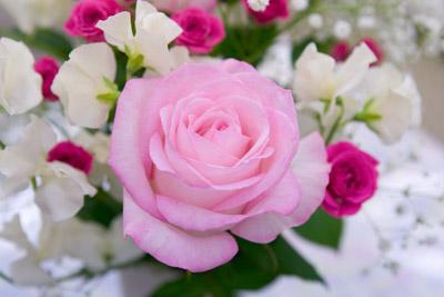 101124flower2_blog