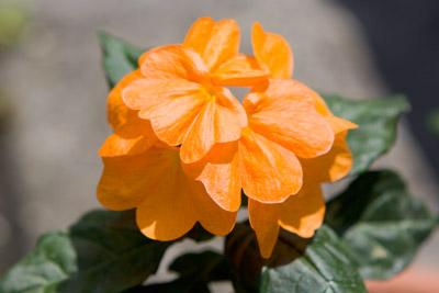 110712flower2_blog