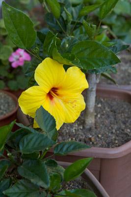 121015flower4_blog