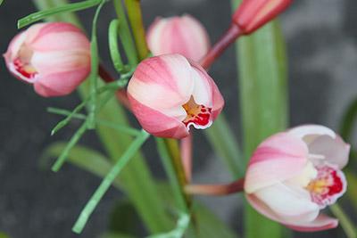 130202flower1_blog