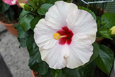 130521flower2_blog