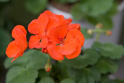 130521flower7_blog