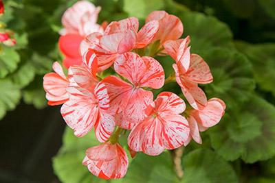 140203flower6_blog