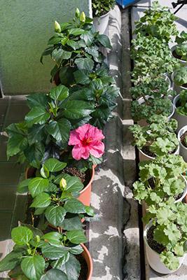 141008flower2_blog