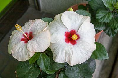 141010flower1_blog