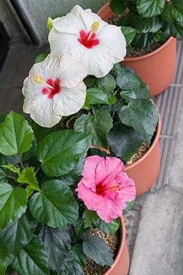 141010flower2_blog