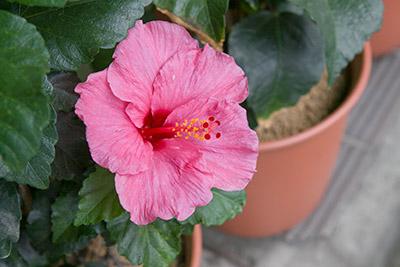 141010flower3_blog