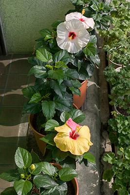 141011flower2_blog