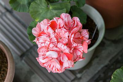 150222flower2_blog