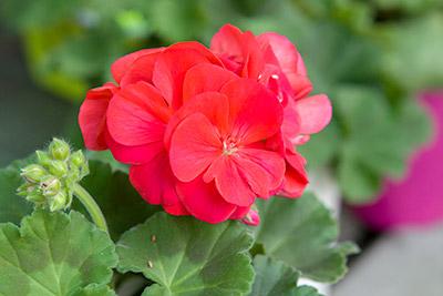 150222flower3_blog