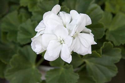 150222flower4_blog
