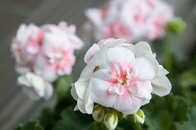 150222flower5_blog