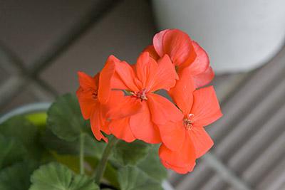 150222flower6_blog