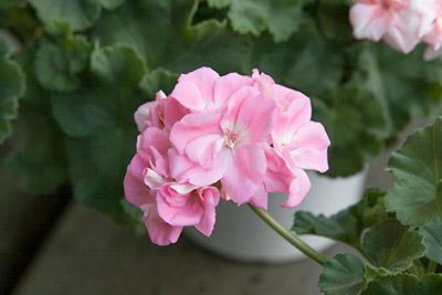 150222flower7_blog