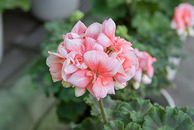 150222flower8_blog