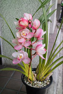 160131flower1_blog