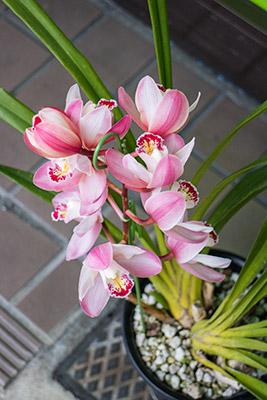 160131flower5_blog