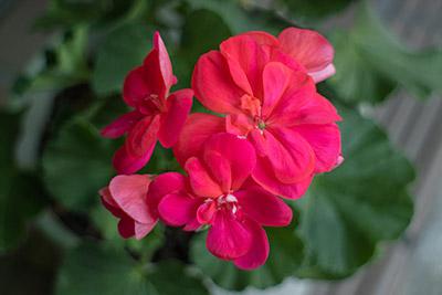 160207flower3_blog
