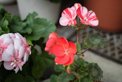 160207flower4_blog