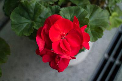 160209flower2_blog