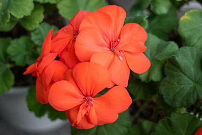 160209flower3_blog