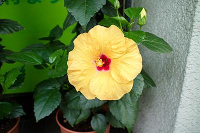 160710flower3_blog