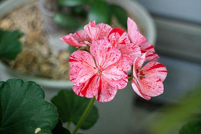 160710flower6_blog