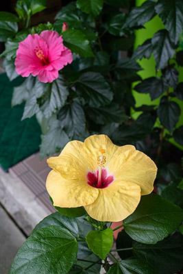 160821flower5_blog