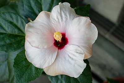 161204flower4_blog