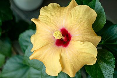 161204flower5_blog