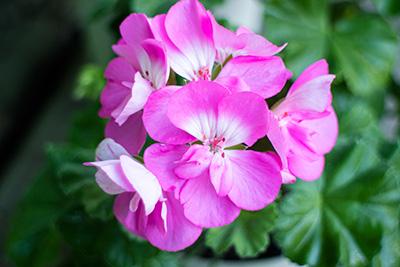 161204flower6_blog