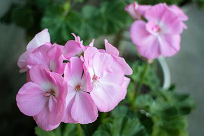 161204flower7_blog