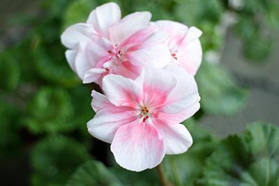 161204flower8_blog