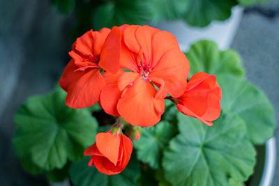 161204flower9_blog