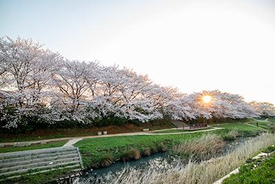180327sakura1_blog