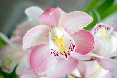 180422flower1_blog