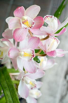 180422flower2_blog