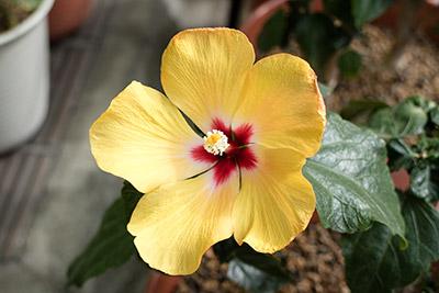 180422flower4_blog